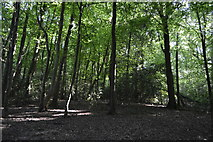 SU8595 : Downley Common by N Chadwick