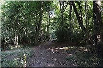SU8594 : Footpath, Little Tinker's Wood by N Chadwick