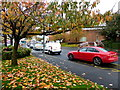 H4572 : Fallen leaves along Dublin Road, Omagh by Kenneth  Allen