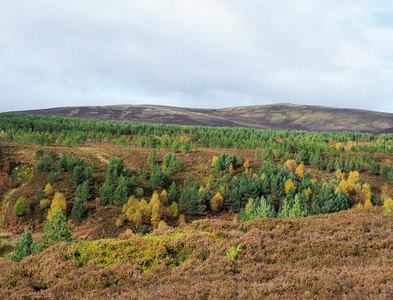 NH9127 : Trees on slope of Garrocher Burn and beyond by Trevor Littlewood