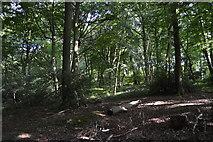 SU8594 : Great Tinker's Wood by N Chadwick