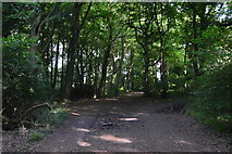 SU8594 : Footpath, Great Tinker's Wood by N Chadwick