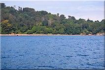 SX4551 : Wooded coastline by N Chadwick