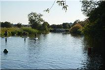 SP4408 : River thames downstream from Eynsham Lock by N Chadwick