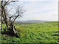 SD6043 : Rough Pasture by Philip Platt
