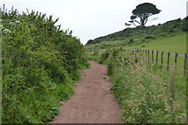 SX5148 : South West Coast path by N Chadwick