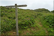 SX4949 : South West Coast Path signpost by N Chadwick