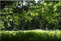 SX4349 : Piersfield Plantation by N Chadwick