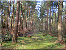 SK2367 : Track through Manners Wood by Trevor Rickard