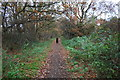 SK5545 : Footpath through woodland strip on east side of A611 by Roger Templeman