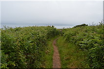 SX4949 : South West Coast Path by N Chadwick