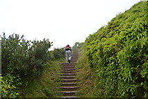SX4850 : Steps, South West Coast path by N Chadwick