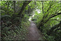 SX4851 : South West Coastal Path by N Chadwick
