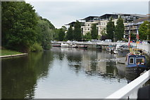 TL4659 : River Cam by N Chadwick