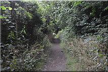 TQ3130 : Footpath to Ardingly Reservoir by N Chadwick