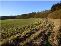 SP8303 : Farmland, Princes Risborough by Andrew Smith
