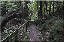 TQ3130 : Steps through the woods by N Chadwick