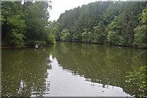 TQ3130 : Ardingly Reservoir by N Chadwick