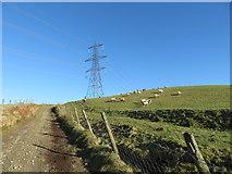 SS9985 : Track on Mynydd Portref by Gareth James