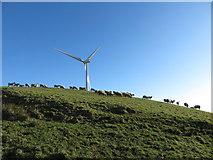 SS9985 : Sheep and wind turbine on Mynydd Portref by Gareth James