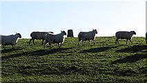 SS9985 : Trig point on Mynydd Portref by Gareth James