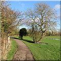 TL4356 : On Grantchester Meadows near Newnham by John Sutton