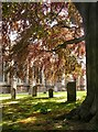 TL1829 : View from beneath a beech tree, Hitchin churchyard by Stefan Czapski