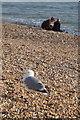 TQ3003 : Herring Gull (Larus argentatus) on Brighton beach by Mike Pennington
