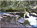 SX2268 : Golitha Falls by Beccy
