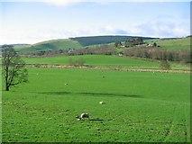 NT4449 : Lambing, Burnhouse Mains by Richard Webb
