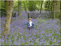 TQ0194 : Bluebell Wood at Chiltern Open Air Museum by Tony and Maureen Kemp