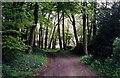 SU7079 : Bur Wood by Rosalind Mitchell