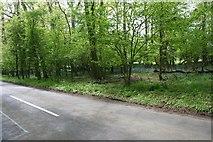 SU7494 : Bowley's Wood by Brendan and Ruth McCartney