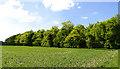 SU4788 : Farmland: Near East Hendred by Pam Brophy