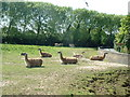 SJ4170 : Llamas, Chester Zoo by Rich Daley
