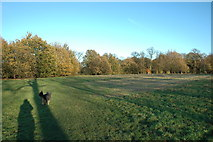 SJ6576 : Marbury Country Park by andy