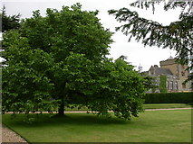 SP5750 : Canons Ashby House and Mulberry Tree by Kokai