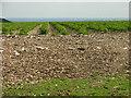 SE9661 : Potatoes by Stuart and Fiona Jackson