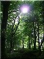 NJ8827 : Woodland Walk at Pitmedden Gardens by Greg Stringham