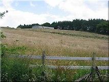 NS4974 : Ungrazed field , Cochno by Richard Webb