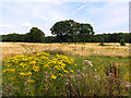 SU4872 : Open Land near Marsh Lane by Pam Brophy