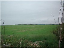 SH3180 : pasture by Dave Smethurst