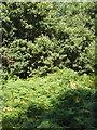 SU7490 : Oak trees and bracken on Summer Heath by David Hawgood
