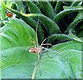 SU4578 : A Ladybird's Hasty Retreat by Pam Brophy