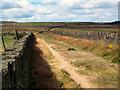SE0632 : Black Edge Lane, Thornton Moor by David Spencer
