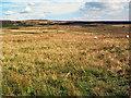 SE0944 : Low Bradup, Morton Moor by David Spencer