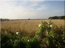TL6950 : Near Great Thurlow, Suffolk by mike