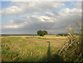 TL6455 : Burrough Green, Cambridgeshire by mike