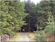 SN6751 : Forest Entrance by Cered