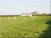 SW8772 : Tregidier farm and sheep near St Merryn by David Hawgood